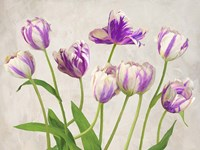 Tulipes Fine Art Print