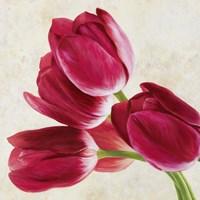Tulip Concerto (Detail) Fine Art Print