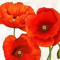 Poppies I Fine Art Print