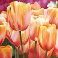 Spring Tulips I Fine Art Print