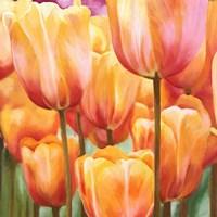 Spring Tulips II Framed Print