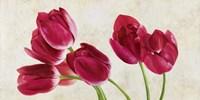 Tulip Concerto Fine Art Print