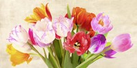 Tulips in Spring Fine Art Print