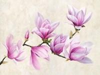 Ramo di Magnolia Fine Art Print