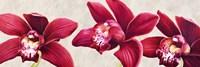 Eleganti Orchidee Fine Art Print