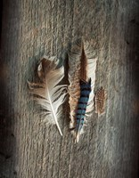 Feather Collection III Fine Art Print