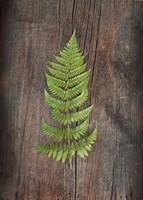 Woodland Fern I Fine Art Print