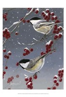 Winter Chickadees II Fine Art Print