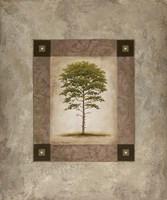 European Pine II Fine Art Print