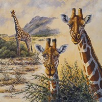 Safari IV Fine Art Print