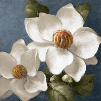 Magnolias on Blue II Fine Art Print