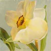 Daffodil Sky II Fine Art Print