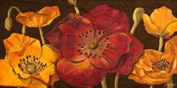 Dazzling Poppies I (black background) Fine Art Print
