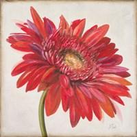 Red Gerber Daisy Fine Art Print