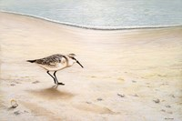 Morning Stroll Fine Art Print