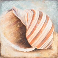 Seashell Collection I Fine Art Print