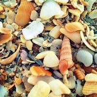 Sea Glass II Fine Art Print