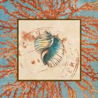Coral Medley Shell I Fine Art Print
