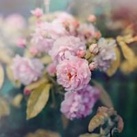 Season of Blossoms Fine Art Print