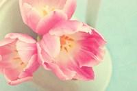 Resplendent Blossoms II Fine Art Print