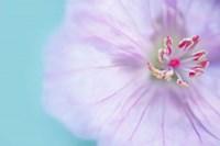 The Heart of a Flower Fine Art Print