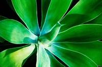 Green Intrigue Fine Art Print
