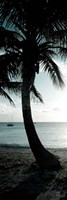 Cool Bimini Palm II Fine Art Print