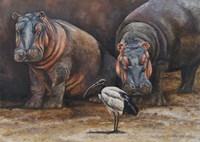Baby Hippos Fine Art Print