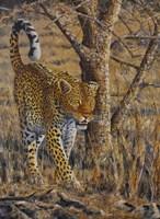 Leopard Walking Fine Art Print