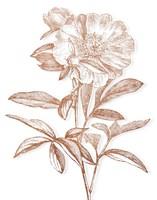 Etched Metallic Floral I Framed Print