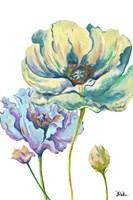 Fresh Colored Poppies II Framed Print