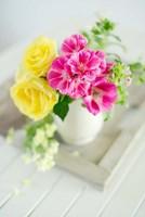 Fresh Morning Bloom Fine Art Print