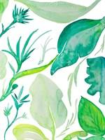 Green Water Leaves II Framed Print