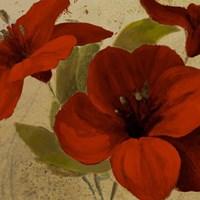 Bahama Flower I Framed Print
