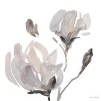 Gray Tonal Magnolias I Fine Art Print
