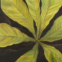 Evergreen I Framed Print
