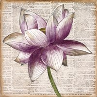Defined Lotus I Fine Art Print