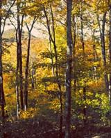 Sanctuary Woods II Fine Art Print