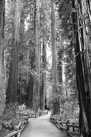 Tree Path I Fine Art Print