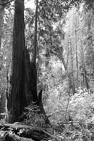 Tree Path II Framed Print
