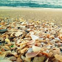 Shells Beach II Fine Art Print