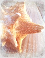 Conch II Fine Art Print