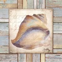 Beach Shell II Fine Art Print