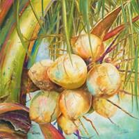 Patricia's Coconuts I Fine Art Print