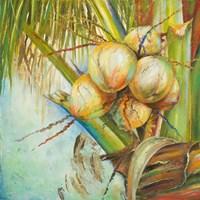 Patricia's Coconuts II Fine Art Print