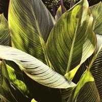 Plant Exploration I Fine Art Print