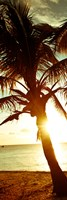 Warm Bimini Palm Fine Art Print