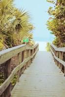 Palm Walkway II Framed Print