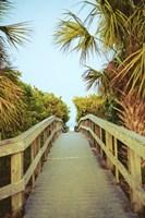 Palm Walkway I Fine Art Print