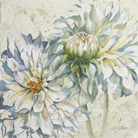 White Dahlias I Fine Art Print